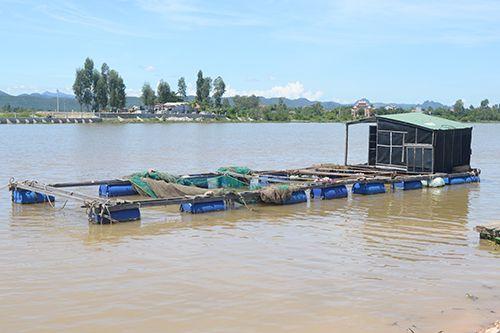 Thương lái thu mua bất thường hàng chục tấn cá chết ở Quảng Bình - Ảnh 1