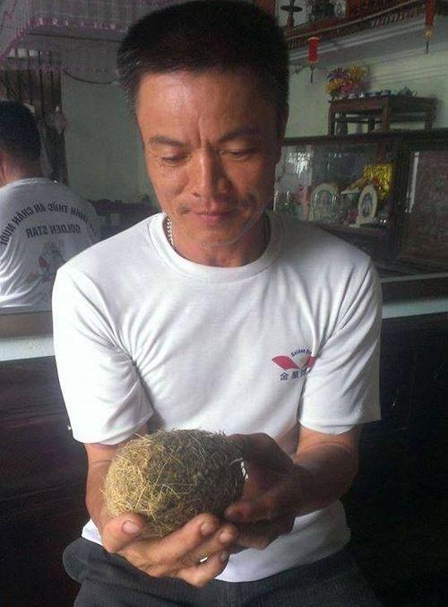 Liên tiếp phát hiện vật lạ trong dạ dày nghi cát lợn quý - Ảnh 2