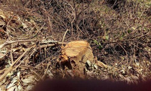Khởi tố vụ án phá rừng giáp ranh tại Quảng Nam - Ảnh 1