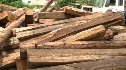 """Gia Lai: Điều tra làm rõ 5 xe chở gỗ lậu cực """"khủng"""" - Ảnh 4"""