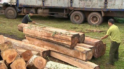 """Gia Lai: Điều tra làm rõ 5 xe chở gỗ lậu cực """"khủng"""" - Ảnh 5"""