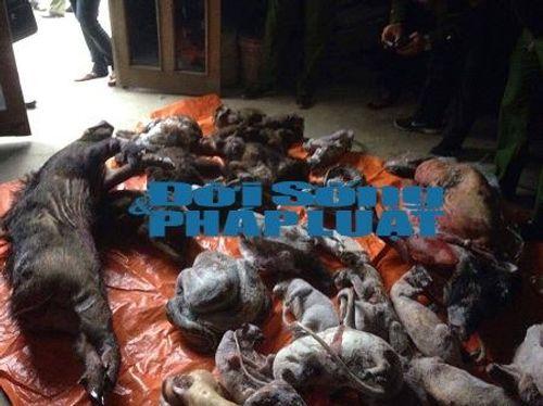 Bắt nóng 200kg động vật hoang dã tại tư gia đầu nậu - Ảnh 1