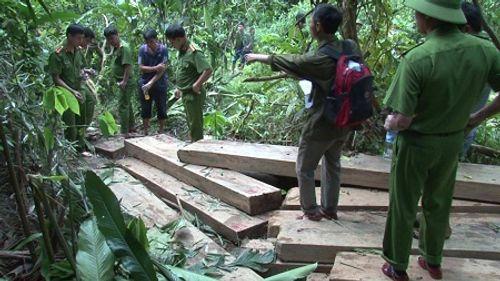 3 đối tượng đang khai thác gỗ trái phép ở rừng đầu nguồn thì bị bắt - Ảnh 1