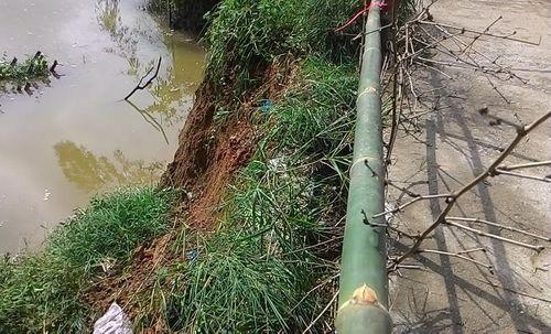 Thừa Thiên – Huế: Sạt lở nghiêm trọng bờ sông Bồ, đe dọa gần 100 hộ dân - Ảnh 2