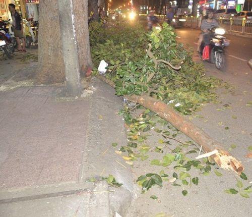 Nhánh cây gãy đè trúng cả gia đình 3 người tại TP HCM  - Ảnh 1