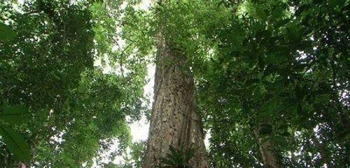 Nỗ lực bảo vệ và phát triển rừng nơi miền biên viễn  - Ảnh 1