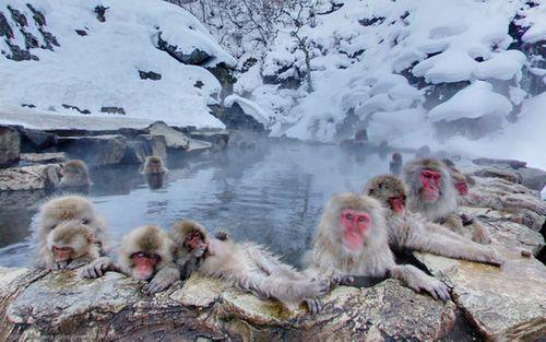 Top 5 địa danh nổi tiếng ở Nhật Bản đẹp say đắm lòng người - Ảnh 5