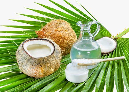 Cứu mái tóc xơ rối bằng phương cách dùng dầu dừa - Ảnh 1
