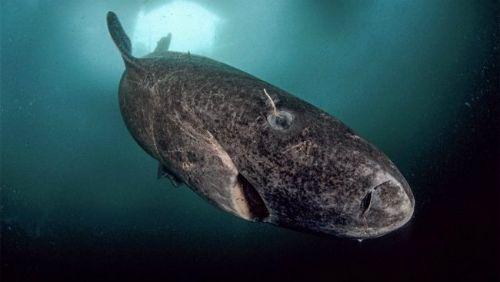 20 điều thú vị về cá mập khiến bạn bất ngờ - Ảnh 4