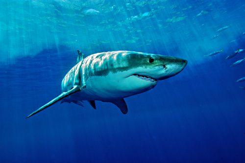 20 điều thú vị về cá mập khiến bạn bất ngờ - Ảnh 5