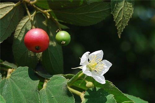 """""""Tuổi thơ dữ dội"""" với những loại trái cây dân giã - Ảnh 4"""