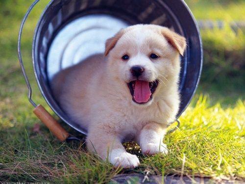 Mách bạn mẹo chọn chó khôn theo kinh nghiệm dân gian - Ảnh 1