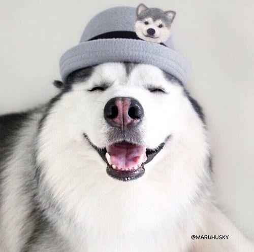 """Tan âu lo muộn phiền trước nụ cười """"tỏa nắng"""" của chú chó đáng yêu - Ảnh 2"""