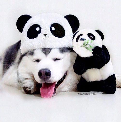 """Tan âu lo muộn phiền trước nụ cười """"tỏa nắng"""" của chú chó đáng yêu - Ảnh 8"""