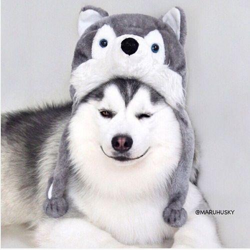 """Tan âu lo muộn phiền trước nụ cười """"tỏa nắng"""" của chú chó đáng yêu - Ảnh 14"""