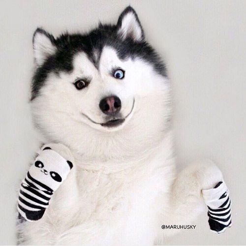 """Tan âu lo muộn phiền trước nụ cười """"tỏa nắng"""" của chú chó đáng yêu - Ảnh 16"""
