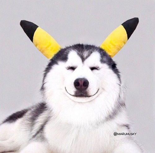 """Tan âu lo muộn phiền trước nụ cười """"tỏa nắng"""" của chú chó đáng yêu - Ảnh 4"""