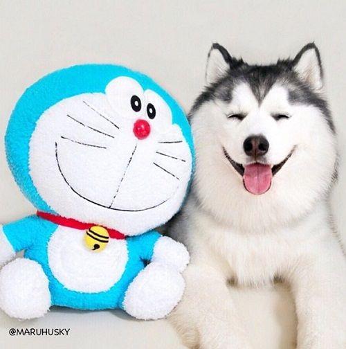 """Tan âu lo muộn phiền trước nụ cười """"tỏa nắng"""" của chú chó đáng yêu - Ảnh 3"""