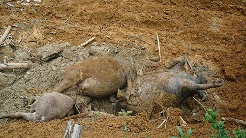 Hiện trường vụ 19 người bị chôn vùi khi đang ngủ ở Hòa Bình - Ảnh 6