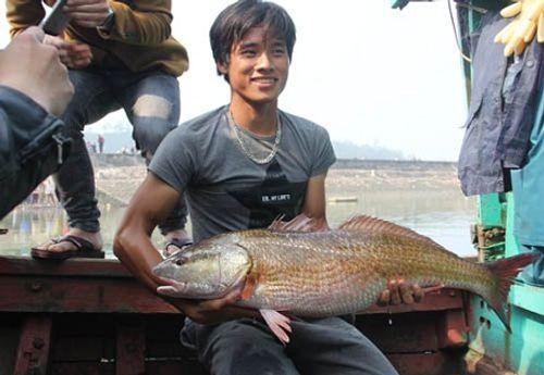 Cá lạ nghi sủ vàng 8kg ở Nghệ An, được trả giá 900 triệu chưa bán - Ảnh 1