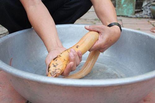 Bắt được lươn vàng óng có chấm đen kỳ lạ ở Bạc Liêu - Ảnh 1