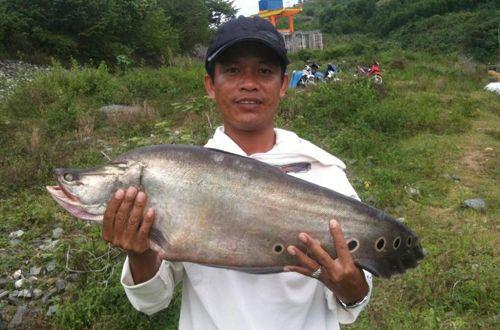Câu được cá thác lác nặng 7 kg ở Quảng Nam - Ảnh 1