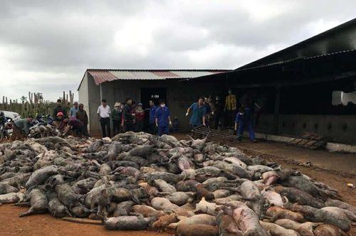 Hỏa hoạn tại trang trại, 1.200 con lợn chết cháy - Ảnh 1