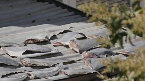 Bộ Ngoại giao thông tin vụ phơi vây cá mập trên mái nhà Đại sứ quán VN tại Chile - Ảnh 1