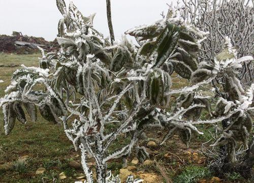 Mẫu Sơn lạnh âm 1 độ C, băng tuyết phủ trắng xóa - Ảnh 1