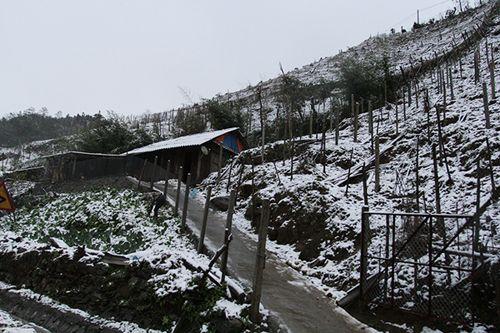Tuyết rơi ở Sa Pa - Ảnh 1