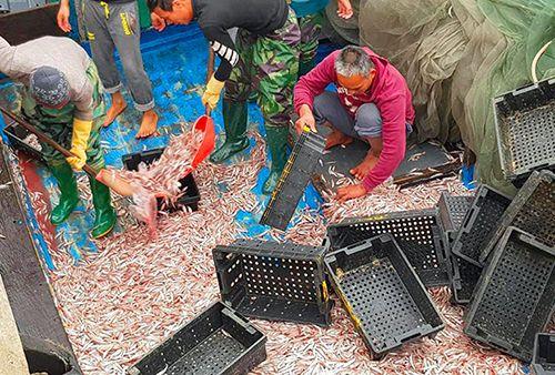 Ngư dân trúng đậm 200 tấn cá cơm ngày giáp Tết - Ảnh 1