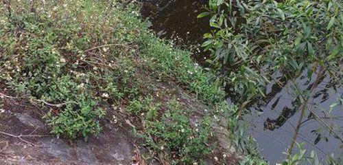 Hoảng hốt phát hiện thi thể 2 thanh niên dưới chân cầu - Ảnh 1