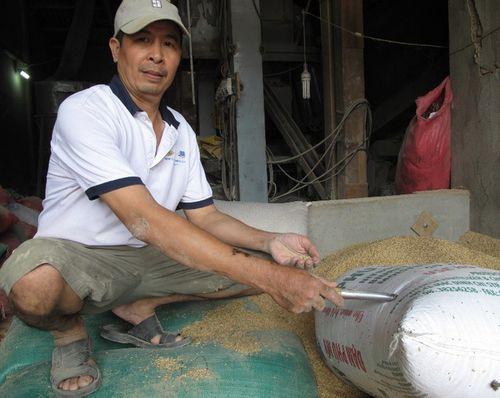 3 cây vàng trong bao lúa sẽ được giao cho địa phương giữ - Ảnh 1