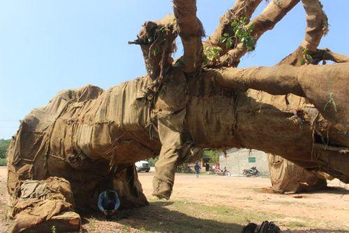 """Lộ nguồn gốc một cây """"siêu khủng"""" di chuyển trên quốc lộ 1 - Ảnh 1"""