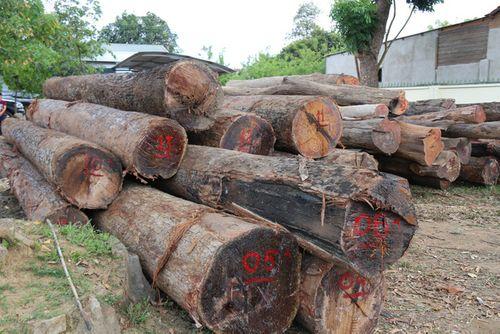 """Vụ gỗ lậu ở Đắk Lắk: Lộ diện đàn em thân tín của trùm Phượng """"râu"""" - Ảnh 2"""