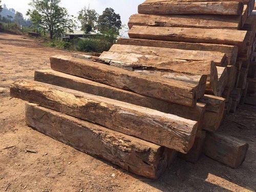 Nghi vấn nam thanh niên chở gỗ trái phép bị... gỗ đè chết - Ảnh 1