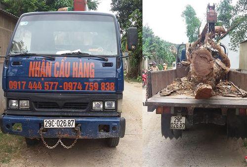 Thuê xe cẩu trộm cây mít trị giá 40 triệu đồng - Ảnh 1