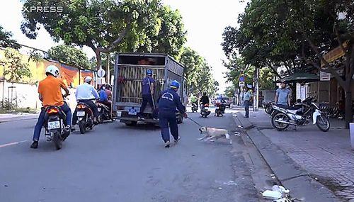 """Ông Đoàn Ngọc Hải yêu cầu xử """"mạnh tay"""" với chó thả rông ở trung tâm Sài Gòn - Ảnh 1"""