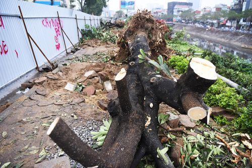3,6 tỷ đồng để chặt hạ, di chuyển 476 cây xanh ở Hà Nội chi ra sao? - Ảnh 2