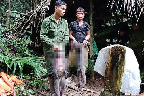 Bắt nhóm thợ săn giết cặp vợ chồng voọc quý đang mang thai - Ảnh 1