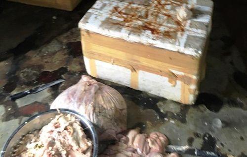Phát hiện hàng trăm kg nội tạng bò không nguồn gốc ở Đà Nẵng - Ảnh 1