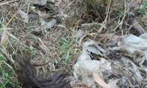 Phát hiện thi thể đang phân hủy trong bao nilon ở khu du lịch bỏ hoang - Ảnh 1