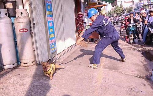 """Bắt chó thả rông: Vất vả vì chó """"quá nhanh, quá nguy hiểm"""" - Ảnh 1"""