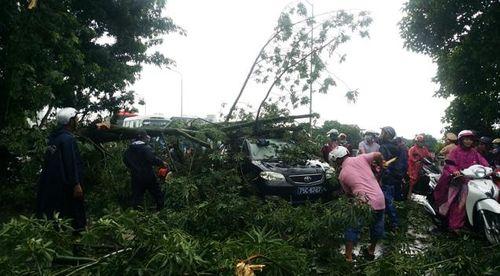 Gió to kèm theo mưa lớn trước bão số 10, nhiều cây bị gãy đổ ở Huế - Ảnh 1