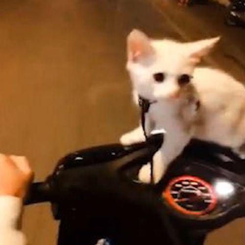 """Video: Chủ đèo mèo """"đi bão"""" mừng tuyển Việt Nam vào chung kết AFF Cup 2018 - Ảnh 1"""