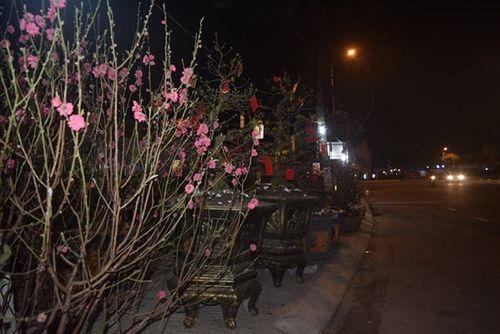 Phóng sự ảnh: Cảnh màn trời chiếu đất trong giá lạnh của người bán hoa tết ở Đà Nẵng - Ảnh 12