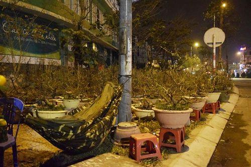Phóng sự ảnh: Cảnh màn trời chiếu đất trong giá lạnh của người bán hoa tết ở Đà Nẵng - Ảnh 8