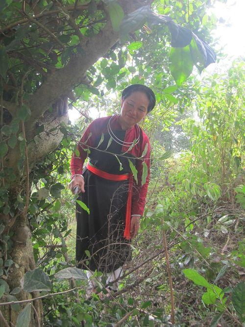 Bài thuốc phòng the huyền thoại của người Cao Lan (Kỳ 2): Bí mật kỳ dược trên núi Na Hang - Ảnh 1