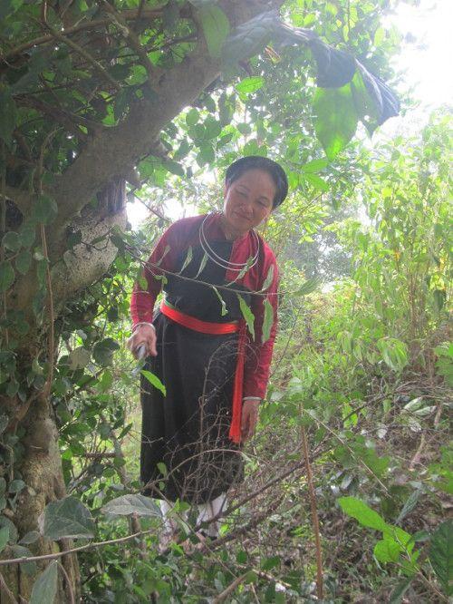 Bài thuốc phòng the huyền thoại của người Cao Lan (Kỳ 3): Vì sao nữ lương y 55 tuổi vẫn 'mơn mởn như gái 20'? - Ảnh 1