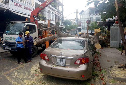 Tin tai nạn giao thông mới nhất ngày 15/8/2018: Cây cổ thụ bật gốc đè bẹp xế hộp giữa phố - Ảnh 1